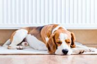 Wilson Boilers Ltd Warm Dogs